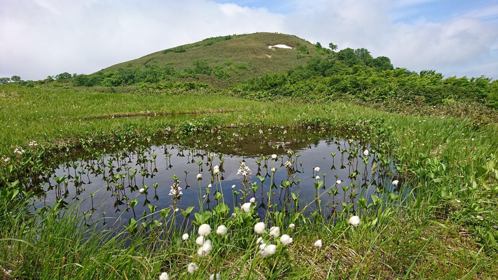 高層湿原の花園、梅雨の晴れ間「...