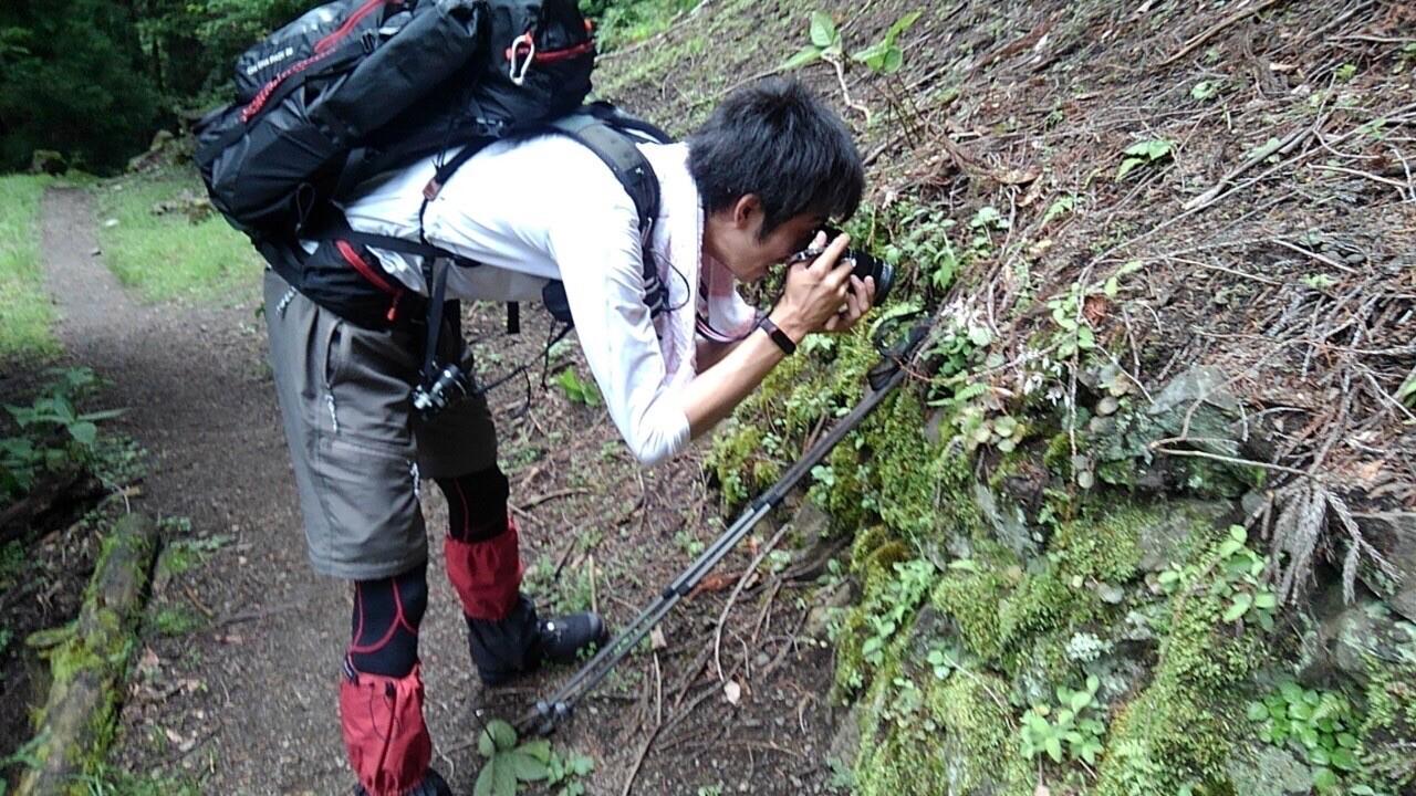 ハタから見た、ユキノシタを必死に撮影する僕🙄