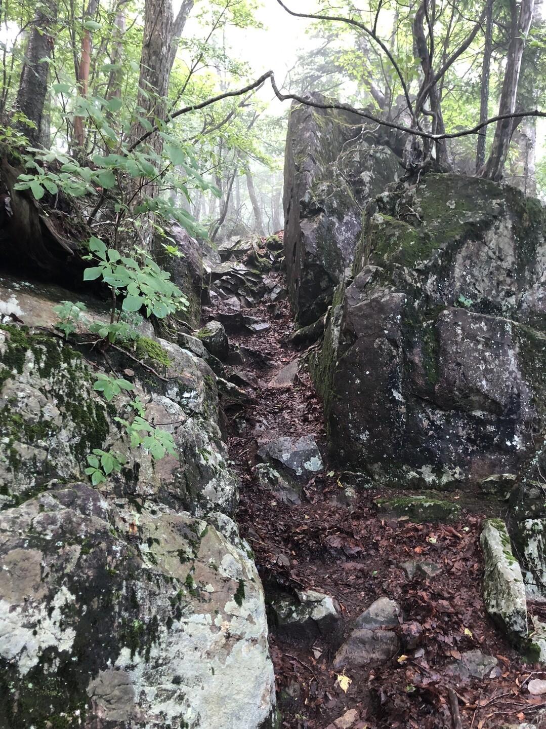 切り通しのような岩。