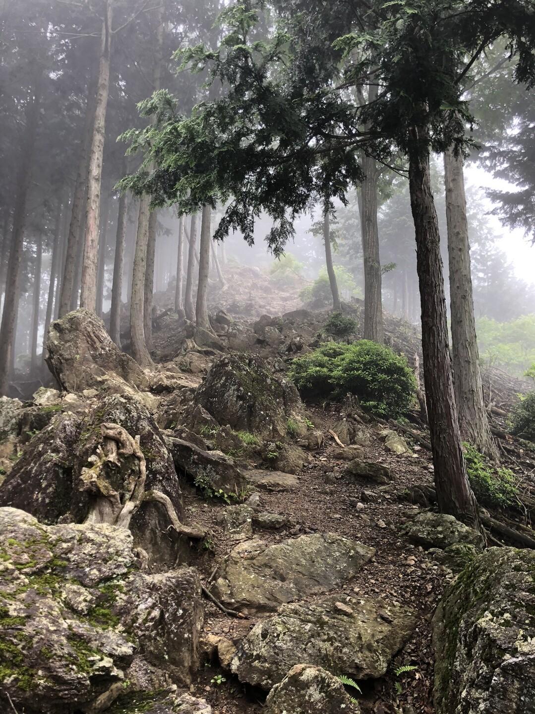 ここでガスってきた!雲の中に突入する山登りも悪くないね。<br> 神秘的な雰囲気の中サクサク進む。