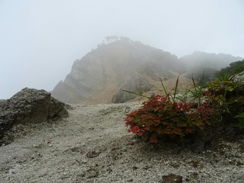 細切れ時間で、鎌ヶ岳❗ | YAMAP ...