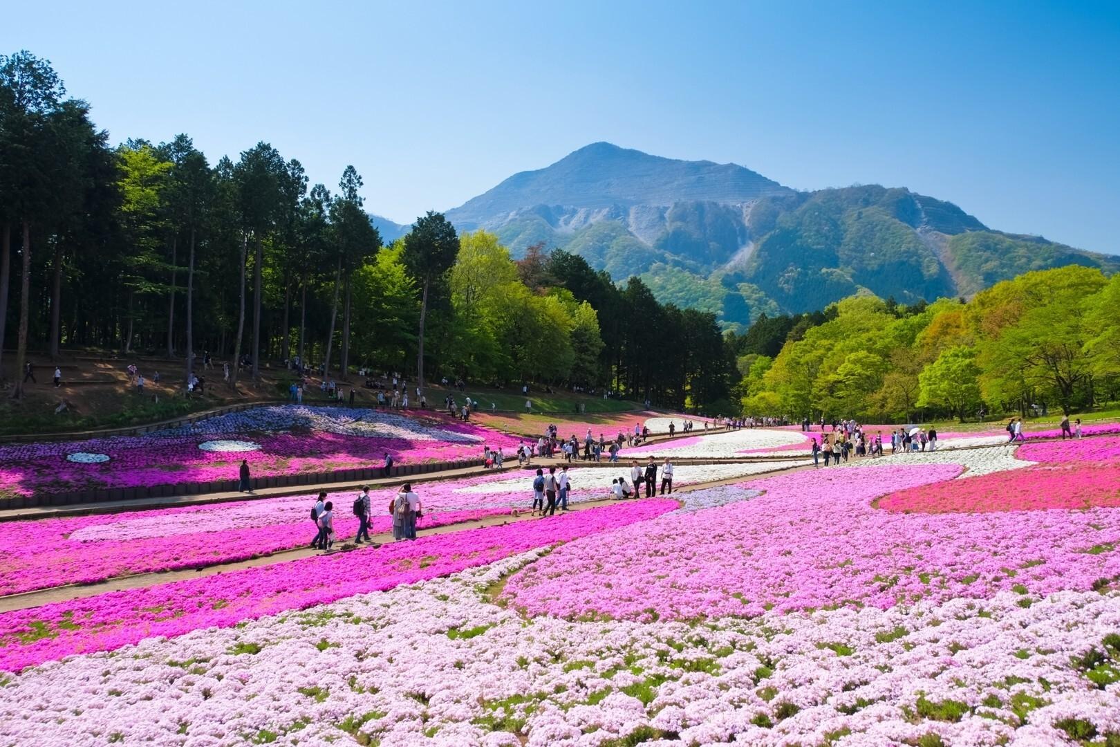 武甲山の写真