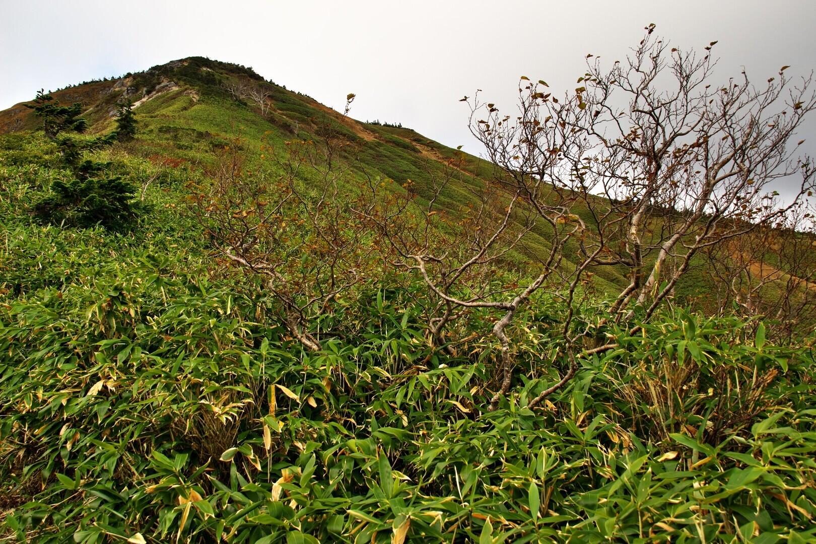 池ノ岳の写真