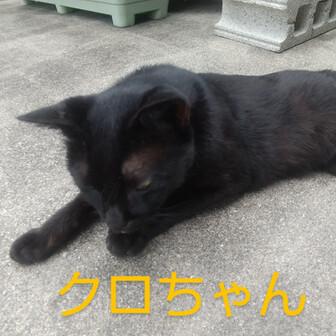 黒猫のクロちゃん