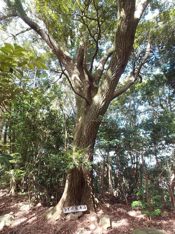 椎ノ巨木山の写真