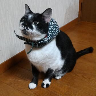 kumaichi