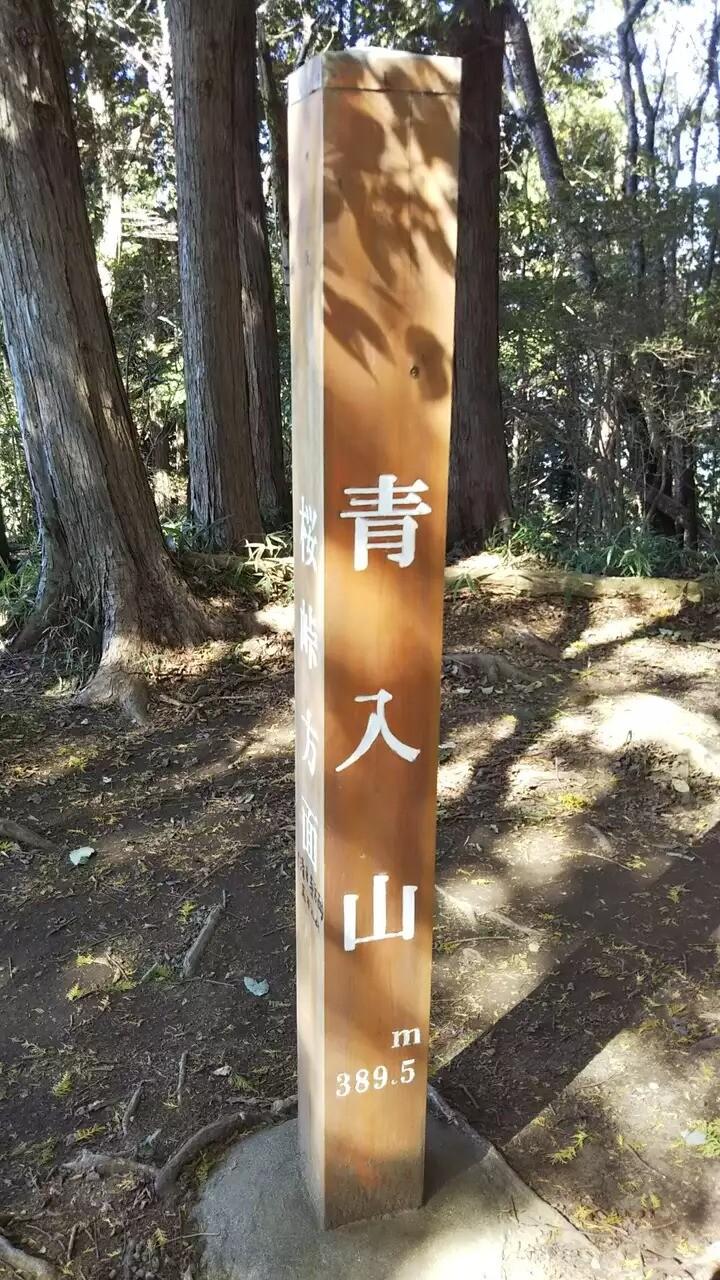 青入山の写真