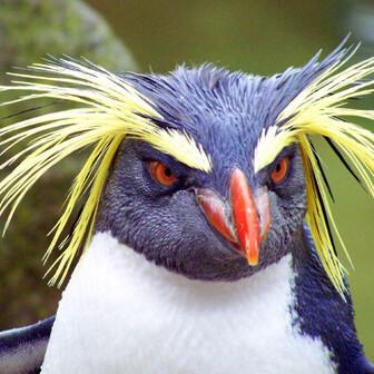 歩人 ペンギンレスラー