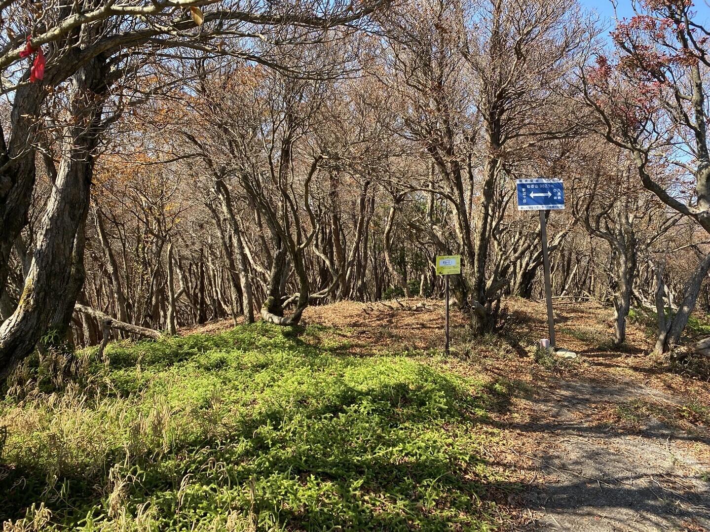 仙香山の写真