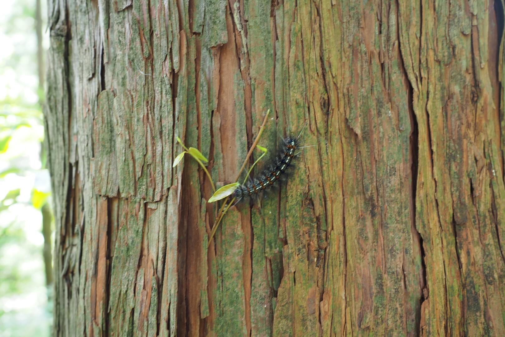 ケムケム!<br> 途中、木からぶら下がってるやつに間一髪ぶつかりかけてマジで危なかった😱<br> <br> 生きているだけで嫌われるなんて、不憫ね。