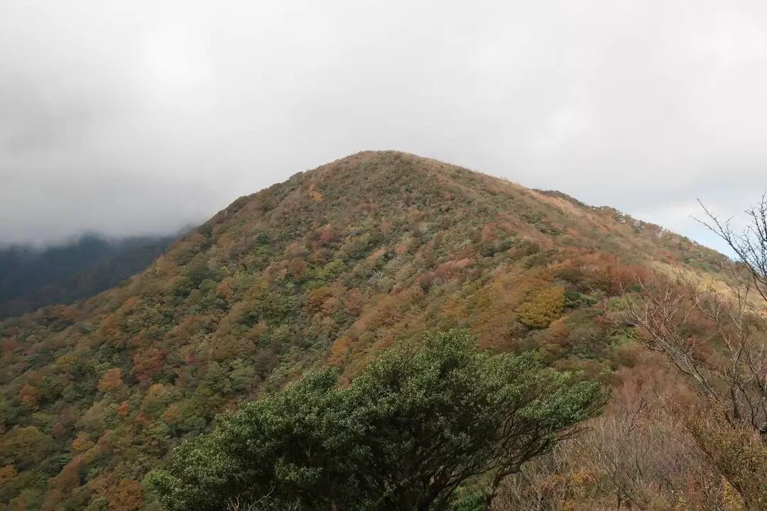万二郎岳(天城山)の写真